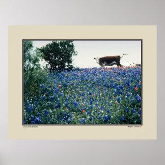 Bluebonnetsの牛-テキサス州 ポスター