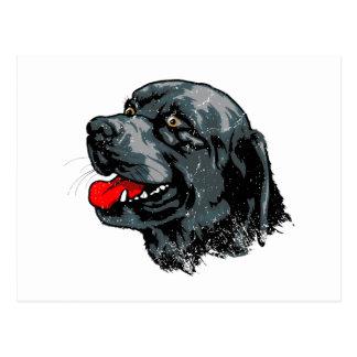 BluetickのCoonhound ポストカード
