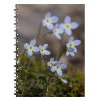 Bluetsの小さい紫色によっては野生の花のノートが開花します ノートブック