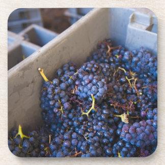 Bodega Marques de Riscalのワイナリー、ブドウ コースター