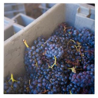 Bodega Marques de Riscalのワイナリー、ブドウ タイル