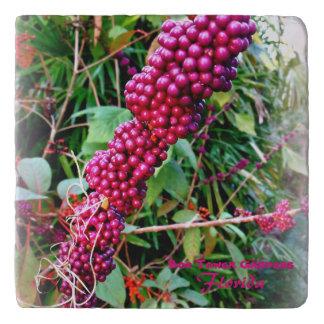 Bokタワーの庭フロリダのアメリカ人Beautyberry トリベット