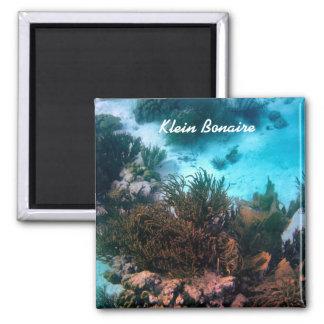 Bonairean礁 マグネット