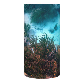Bonariarean礁 LEDキャンドル