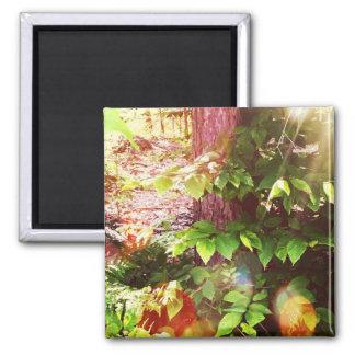 Boothbayの森林秘法2インチの正方形の磁石 マグネット