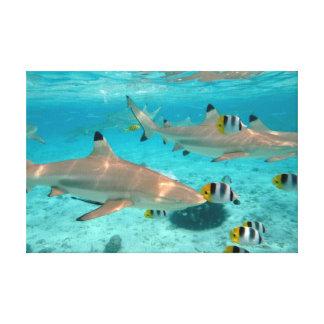 Bora Boraの礁湖の鮫 キャンバスプリント