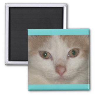 Brandis-ベージュnの白の子猫 マグネット