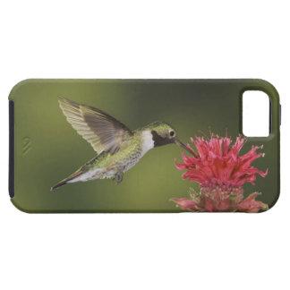 Breit-angebundener Kolibri、Selasphorus 2 iPhone SE/5/5s ケース