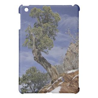 Bristleconeマツ2 iPad Mini Case