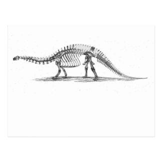 Brontosaurusの骨組 ポストカード