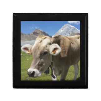 Bruna Alpinaの牛 ギフトボックス