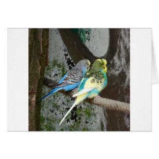 Budgieのすばらしい鳥 カード