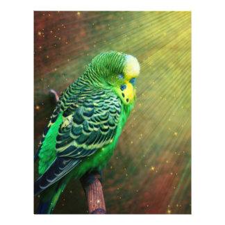 Budgieのエキゾチックな鳥 チラシ