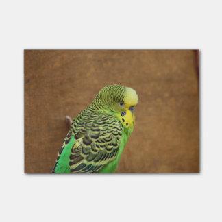Budgieの鳥 ポストイット