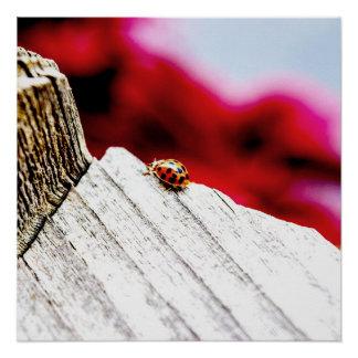 Bug Perfect Posteファインアートの写真撮影の幸運な女性 ポスター