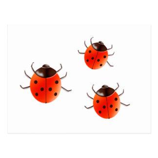 Bugs女性 ポストカード