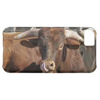 Bullとの混乱角を得ます iPhone5Cケース