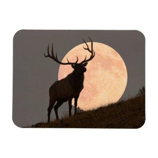 Bullの威厳のあるなオオシカおよび満月の上昇 マグネット