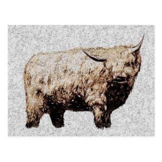 Bullの毛深い高地の郵便はがき ポストカード