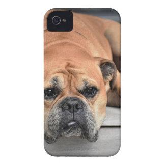 Bull犬 Case-Mate iPhone 4 ケース