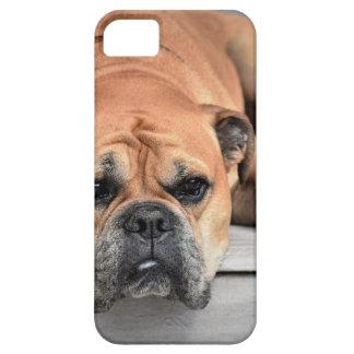 Bull犬 iPhone SE/5/5s ケース