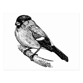 Bullfinchの鳥のスケッチ ポストカード