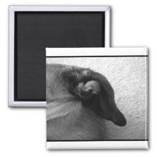 Bullmastiffの耳2 マグネット