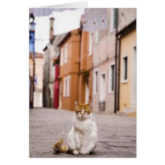 Burano、イタリアの通りの猫。  2006. カード
