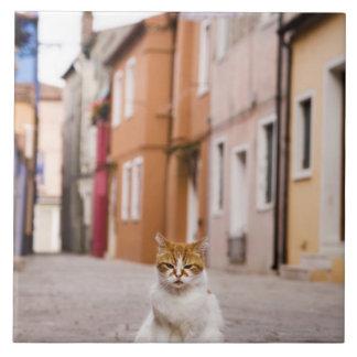 Burano、イタリアの通りの猫。  2006. タイル