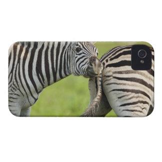 Burchellのシマウマ(Equusのクアッガのburchellii)、 Case-Mate iPhone 4 ケース