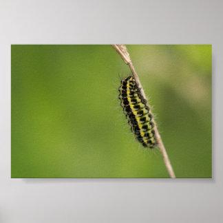 Burnetのガの幼虫 ポスター
