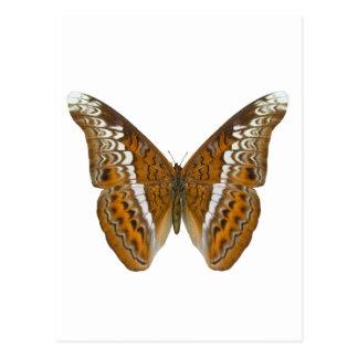 Butterfly海軍大将 ポストカード