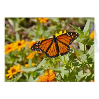 Butterly - Notecard (昆虫)オオカバマダラ、モナーク カード