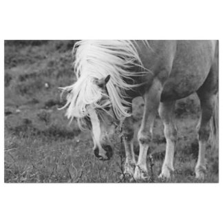 BWの馬 薄葉紙