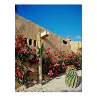 Cabo San Lucas、Baja、メキシコの花 ポストカード