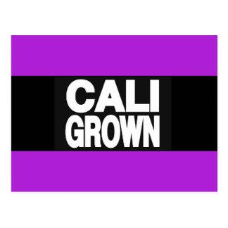 Caliによって育てられる2紫色 ポストカード