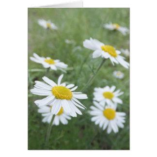 Camomileの庭 カード