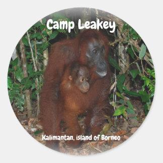 Camp Leakey in Tanjung Puting National Park Borneo ラウンドシール