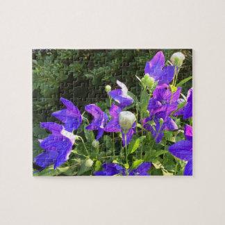 Campanulaの集り(青い気球花) --- ジグソーパズル