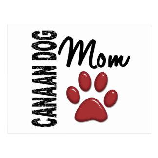 Canaan犬のお母さん2 ポストカード