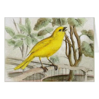 Canary Vintage Illustration カード
