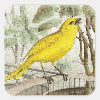 Canary Vintage Illustration スクエアシール