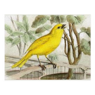Canary Vintage Illustration ポストカード