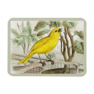 Canary Vintage Illustration マグネット