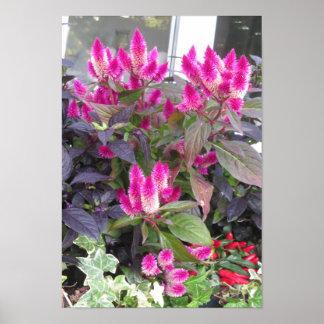 Candianの野生の庭は紫色色の花を駐車します ポスター
