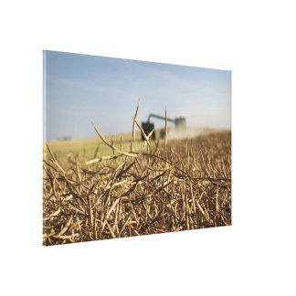 Canola Harvest Combine Grain Cart キャンバスプリント