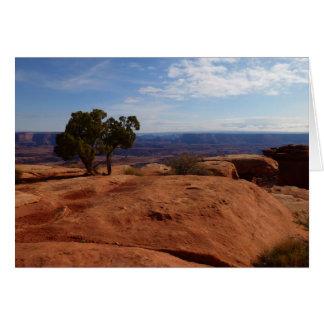 Canyonlandsの国立公園の赤い石からの木 カード