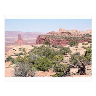 Canyonlandsの国立公園、ユタ、米国12 ポストカード