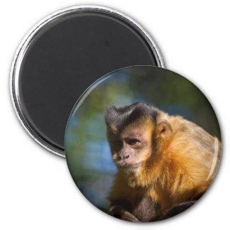 Capuchin猿 マグネット