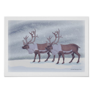 Caribou Reindeer in the Snow ポスター